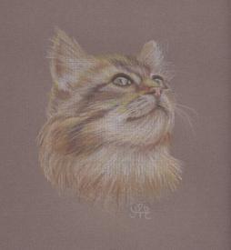 Cat scan (2)