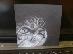 CD Cat