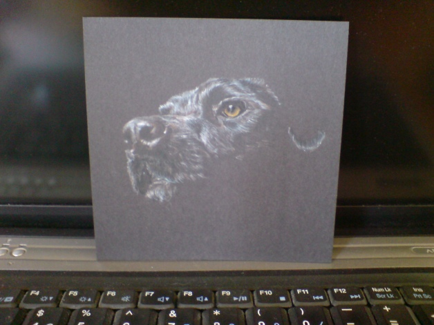 CD Dog